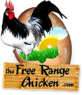 The Free Range Chicken